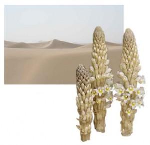タクラマカン砂漠とカンカ